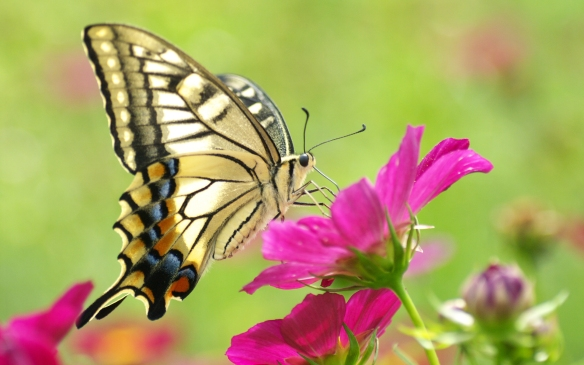flower-and-butterfly-picture-wallpaper-gallery-3i6kr5